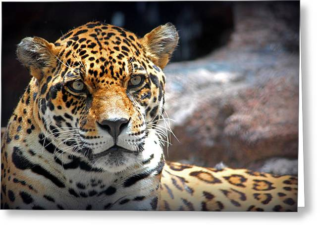 The Ole Leopard Don't Change His Spots Greeting Card by Lynn Sprowl
