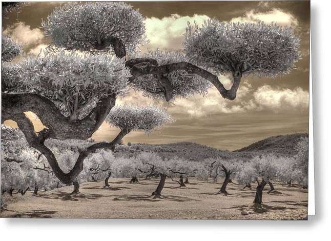 The Olive Grove Greeting Card