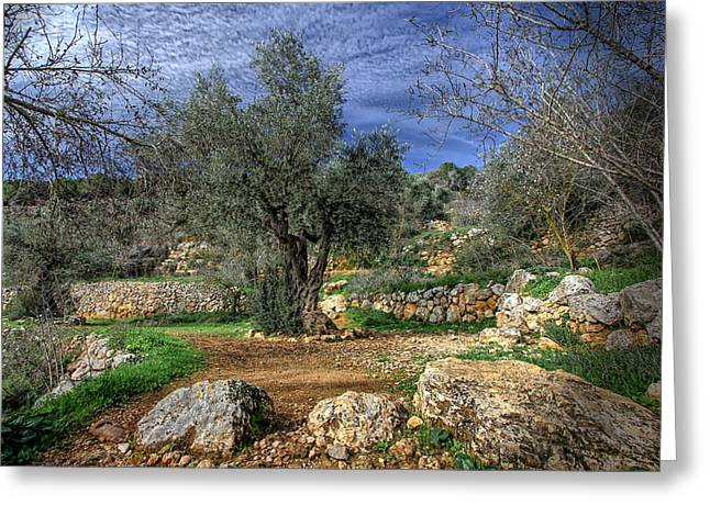 The Olive Tree Greeting Card