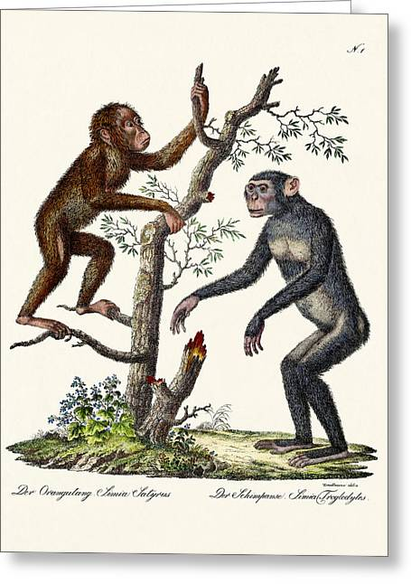 The Orang-outang Greeting Card by Splendid Art Prints