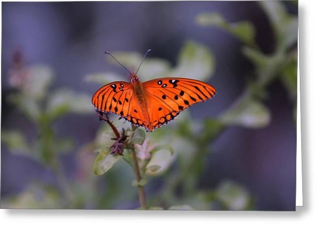 The Orange Wings Greeting Card