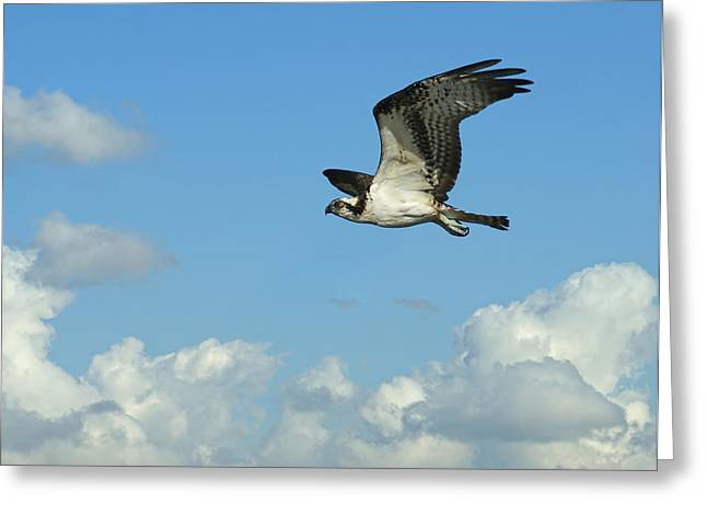 The Osprey 2 Greeting Card