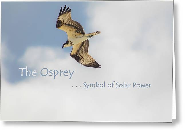 Greeting Card featuring the photograph The Osprey by DigiArt Diaries by Vicky B Fuller