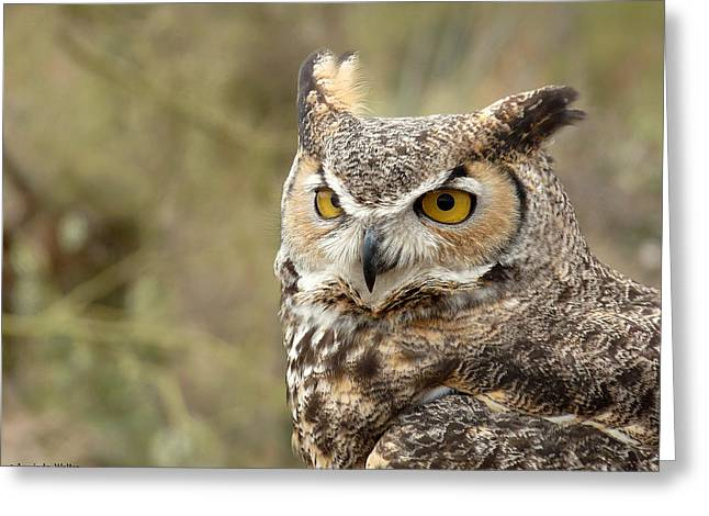 Greeting Card featuring the photograph The Owl by Lucinda Walter