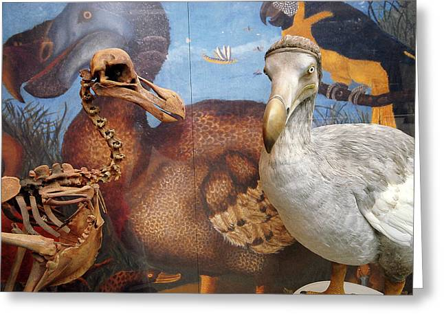 The Oxford Dodo Greeting Card by Greg Smolonski/oxford University Images