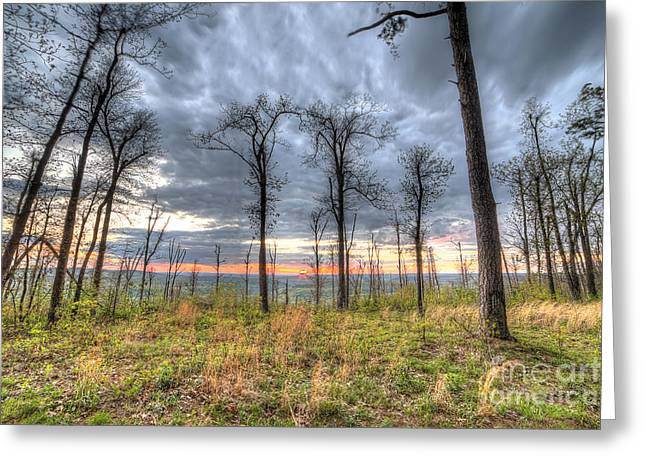 The Ozark National Forest Greeting Card