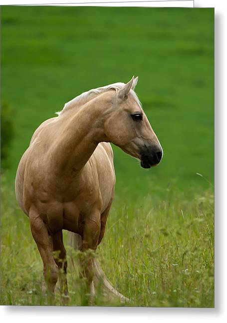 The Pale Brown Horse Greeting Card