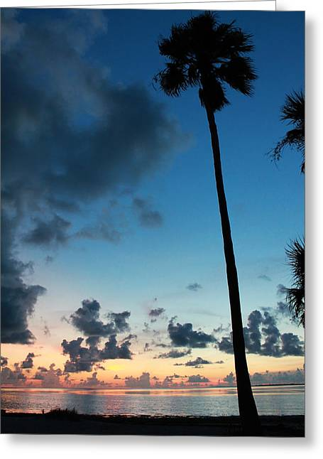 The Palm Majestic Sunset Beach Tarpon Springs Florida Greeting Card by Robin Lewis