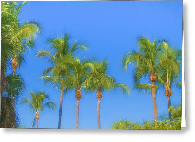 The Palms Greeting Card by Kim Hojnacki