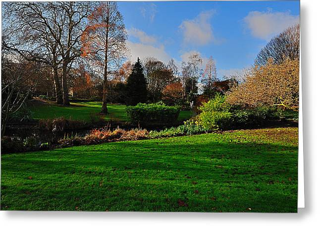 Greeting Card featuring the photograph The Park And The Autumn Sun by Marwan Khoury