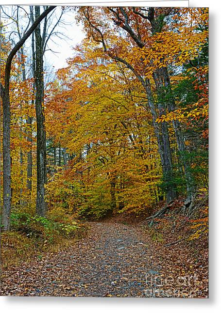 The Path Greeting Card by Paul Ward