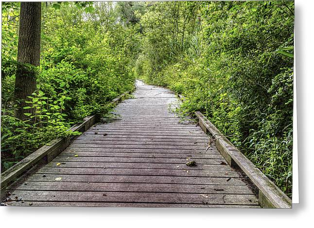 The Path Greeting Card by Tim Buisman