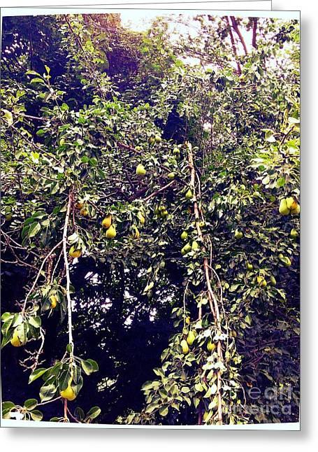 The Pear Tree Greeting Card by Garren Zanker