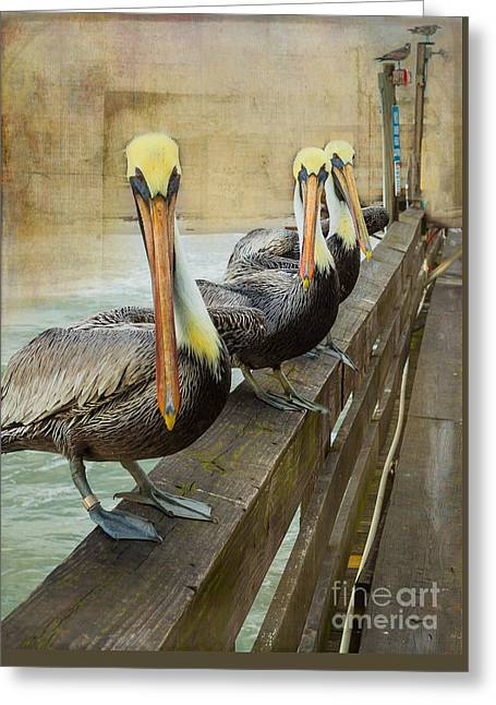 The Pelican Gang Greeting Card by Steven Reed