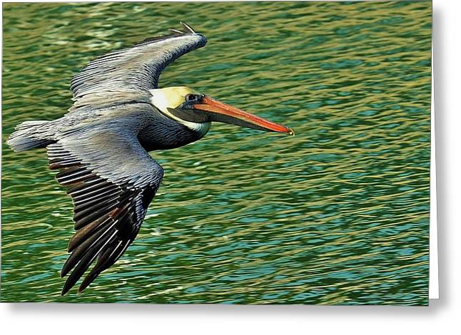 The Pelican Glide Greeting Card