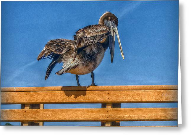 Greeting Card featuring the photograph The Pelican by Hanny Heim