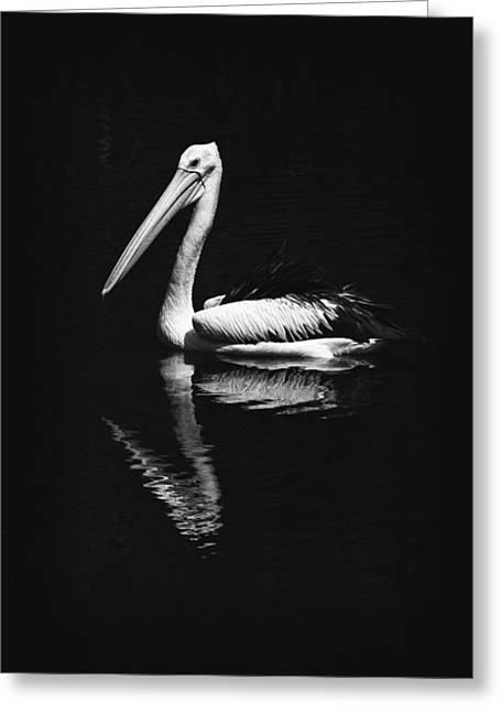 Greeting Card featuring the photograph The Pelican by Zoe Ferrie