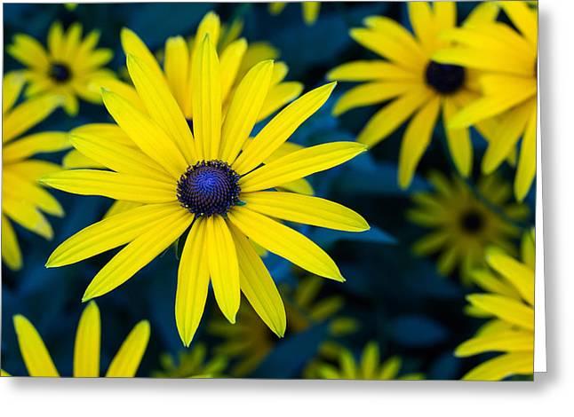 The Perennial Petal Greeting Card