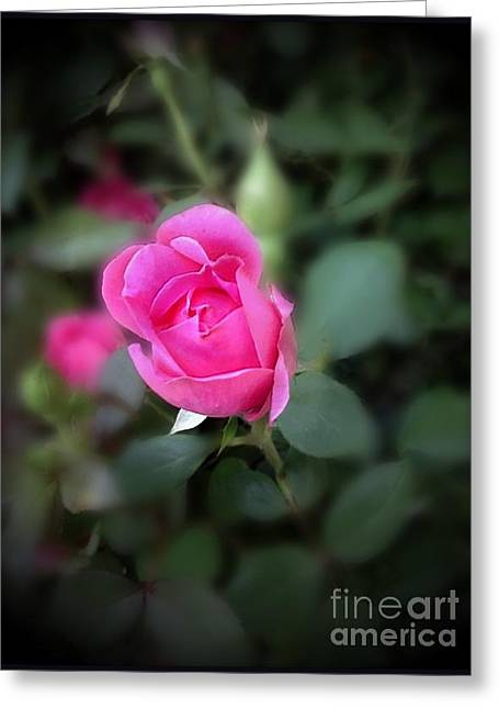 The Perfect Pink Rose 1 Greeting Card by Becky Lupe