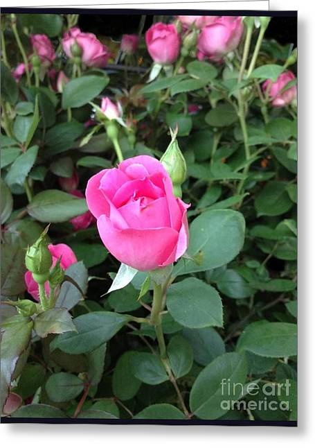 The Perfect Pink Rose 2 Greeting Card by Becky Lupe