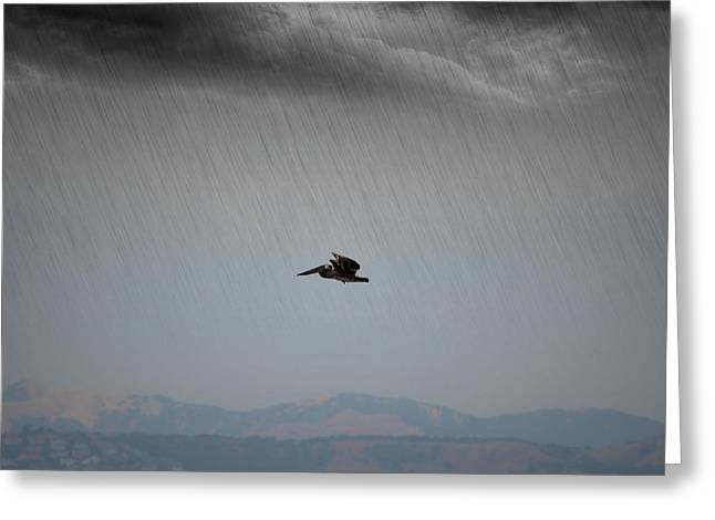 The Persevering Pelican Greeting Card