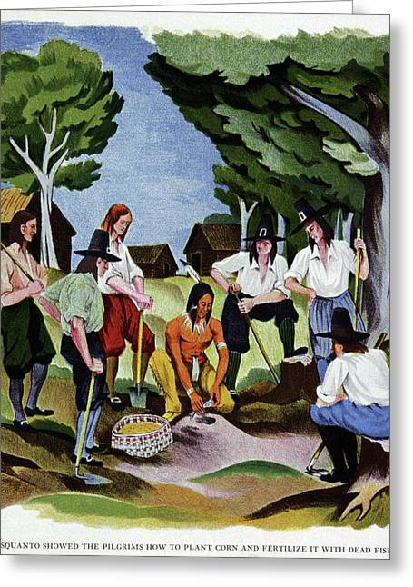 The Pilgrims Learning To Farm Greeting Card