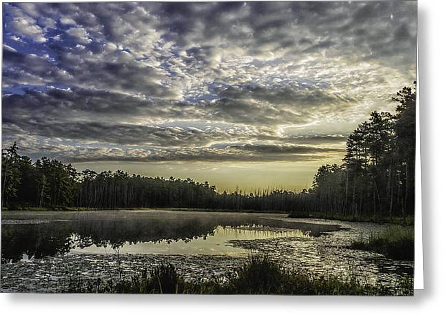 The Pines Greeting Card by Louis Dallara