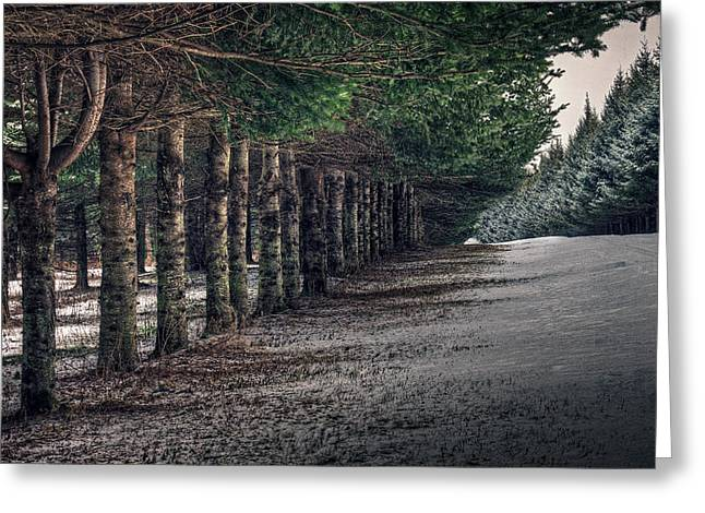 The Pines Of Trenton Greeting Card by Everet Regal