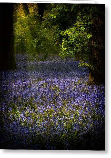 Greeting Card featuring the photograph The Pixie's Bluebell Patch by Chris Lord