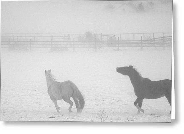 The Play Of Horses Greeting Card