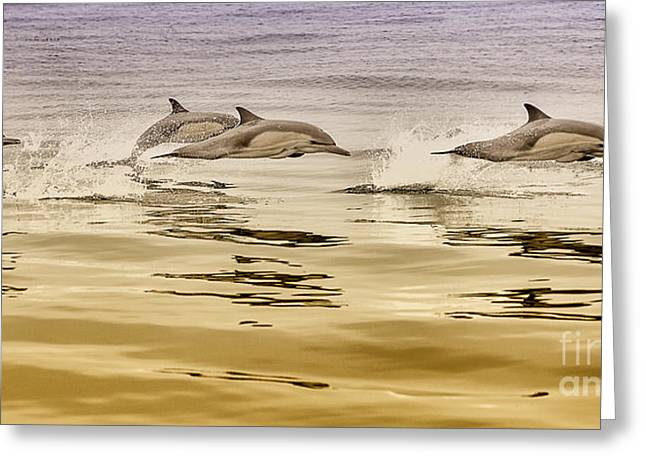 Greeting Card featuring the photograph Dolphin Canvas Print, Photographic Print, Art Print, Framed Print, Greeting Card, Iphone Case, by David Millenheft