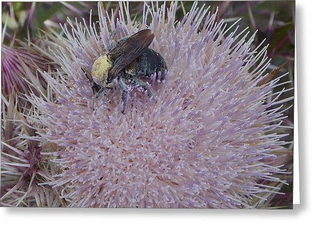 Greeting Card featuring the photograph The Pollen Count Is High Today by John Glass