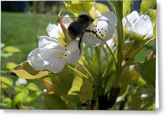 The Pollenator Greeting Card