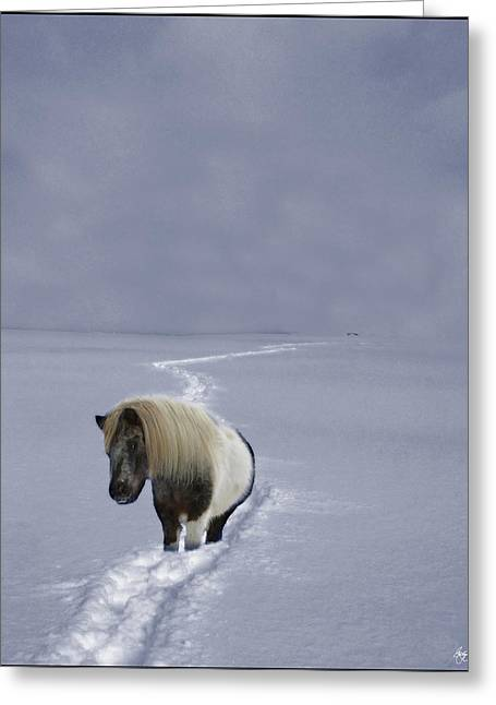 The Ponys Trail Greeting Card