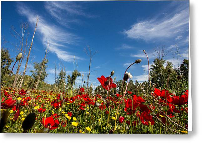 The Poppies Field Greeting Card