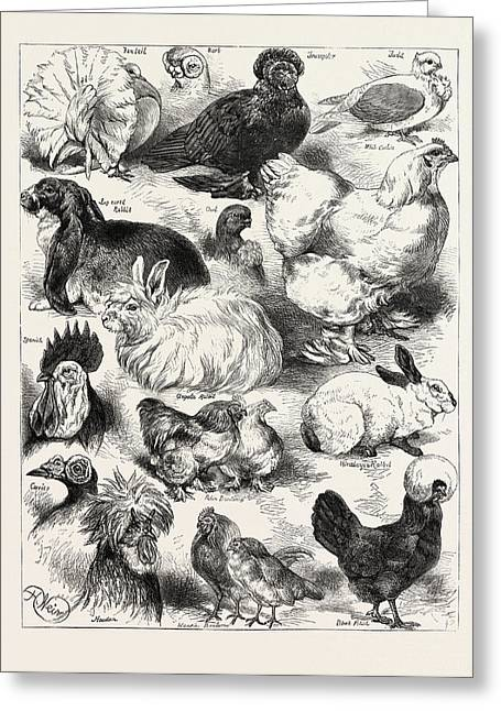 The Poultry, Pigeon, And Rabbit Show At The Crystal Palace Greeting Card by Angolan School