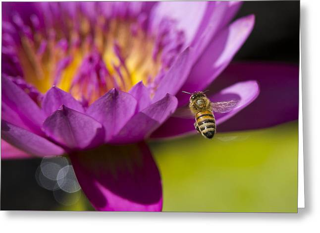The Promise Of Pollen Greeting Card by Priya Ghose