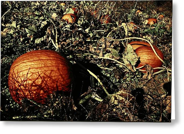 The Pumpkin Patch Greeting Card by Chris Berry