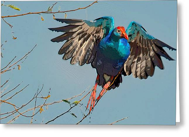 The Purple Swamphen Greeting Card