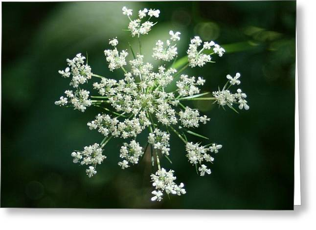The Queen Of Lace Greeting Card by Barbara S Nickerson