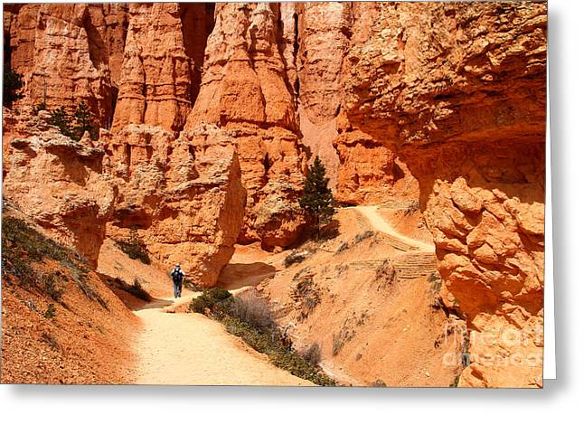 The Queens Garden Trail Bryce Canyon Greeting Card by Butch Lombardi