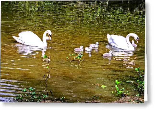 The Queens Swans Greeting Card by Marilyn Holkham
