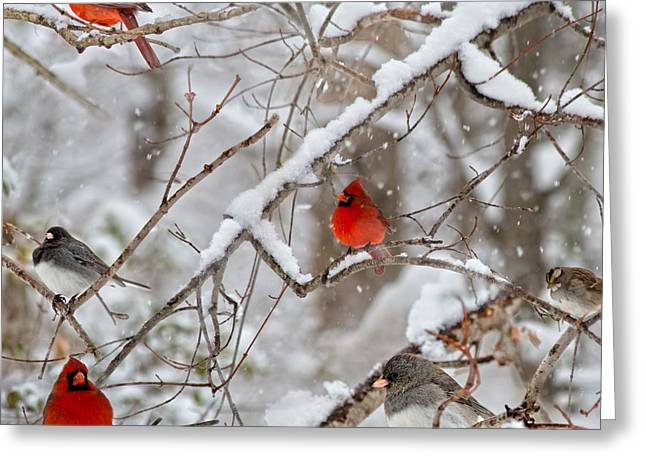The Quiet Within The Forest Greeting Card by Betsy Knapp