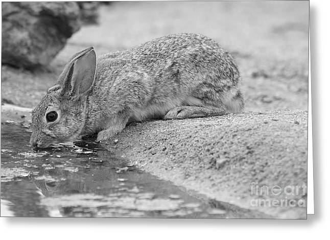 The Rabbit And The Water Greeting Card by Ruth Jolly