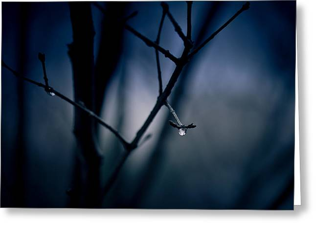 The Rain Song Greeting Card by Shane Holsclaw
