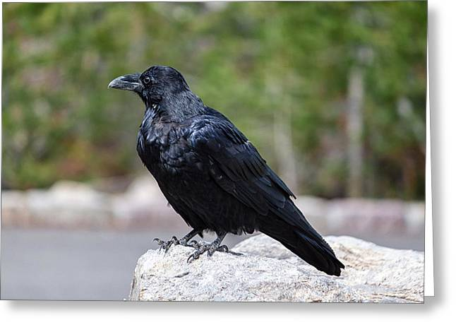 The Raven Greeting Card by Lars Lentz