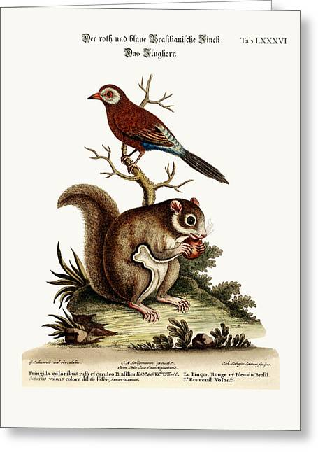 The Red And Blue Brasilian Finch. The Flying Squirrel Greeting Card by Splendid Art Prints