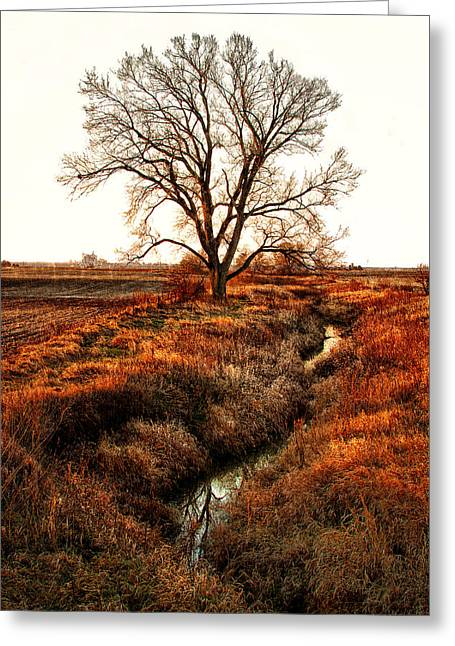 The Red Morning Tree Greeting Card