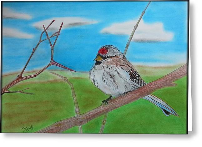 The Redpoll Greeting Card