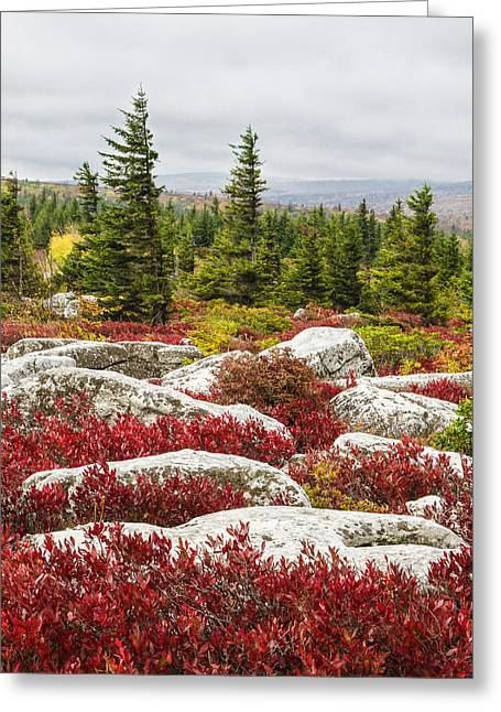 The Reds And Greens Of Dolly Sods Wilderness In West Virginia Greeting Card by Bill Swindaman